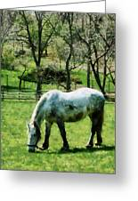Appaloosa In Pasture Greeting Card