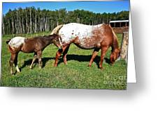 Appaloosa Mamma And Baby Greeting Card