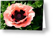 Appealing Pink Poppy Greeting Card