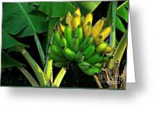 Apple Banana Greeting Card