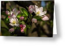 Apple Blossom 3 Greeting Card