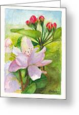 Apple Blossom And Buds Greeting Card