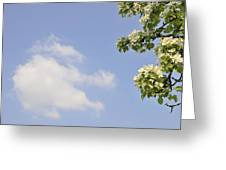 Apple Blossom In Spring Blue Sky Greeting Card