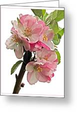 Apple Blossom Vertical Greeting Card