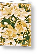 Apple Blossoms 2 Greeting Card