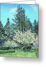 Apple Blossoms And Redwoods Greeting Card