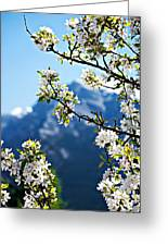 Apple Blossoms Frame The Rockies Greeting Card