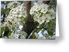 Apple Blossoms Greeting Card by Randi Shenkman