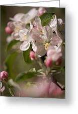 Apple Flowers Greeting Card