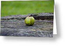 Apple Gourd Greeting Card