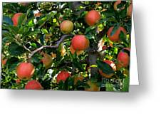 Apple Harvest - Digital Painting Greeting Card