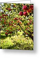 Apple Orchard Greeting Card