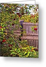 Apple Orchard Harvest Greeting Card