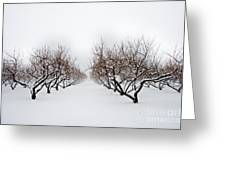 Apple Orchard Greeting Card by Ken Marsh