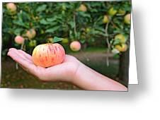 Apple Pick Greeting Card