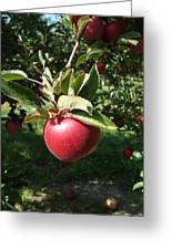 Apple Picking Greeting Card