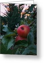 Apple Sunset Greeting Card