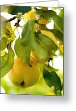Apple Taste Of Summer 1 Greeting Card