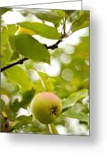 Apple Taste Of Summer 2 Greeting Card