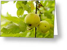 Apple Taste Of Summer 3 Greeting Card