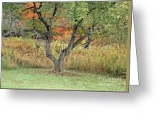 Apple Tree In Autumn Greeting Card
