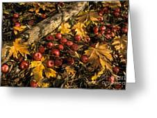 Apples In Fall Greeting Card