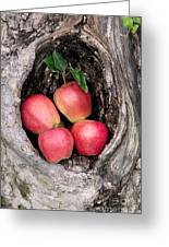 Apples In Tree Greeting Card