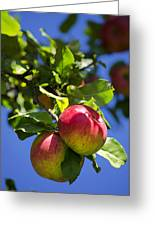 Apples On Tree Greeting Card