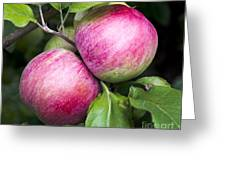 2 Apples On Tree Greeting Card