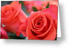 Apricot Beauty Greeting Card