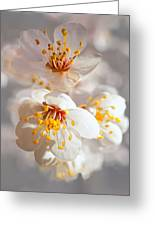Apricot Blooms Greeting Card