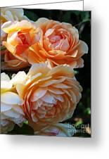 Apricot Dahlias Greeting Card