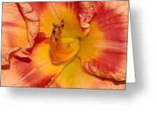 Apricot Daylily Close-up Greeting Card