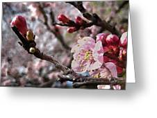 Apricot Floral Greeting Card