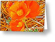 Apricot Globemallow In Vermilion Cliffs National Monument-arizona Greeting Card