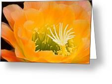 Apricot Glow Greeting Card
