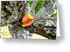 Apricot Leaf And Lichen Greeting Card