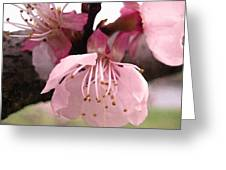 Apricot Spring Greeting Card