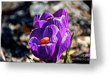 April Crocus' Greeting Card