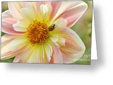 April Heather Dahlia With Ladybug Greeting Card