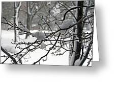 April Snow Greeting Card by Kay Novy