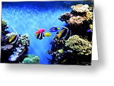 Aquarium 1 Greeting Card