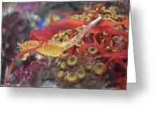 Aquarium Fun Greeting Card