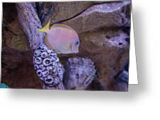 Aquarium Impression Greeting Card