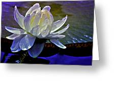Aquatic Beauty In White Greeting Card