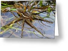 Aquatic Hunting Spider Greeting Card