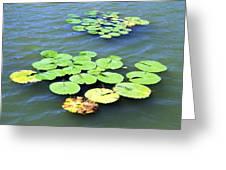 Aquatic Plants Greeting Card