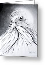 Arabian Falcon Greeting Card