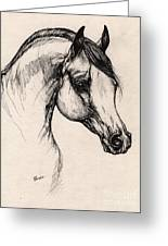 Arabian Horse Drawing 24 Greeting Card