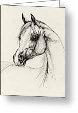 Arabian Horse Drawing 27 Greeting Card